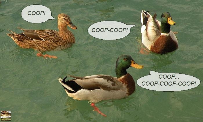 CC 2015.10.12 Coopcoopcoop 003