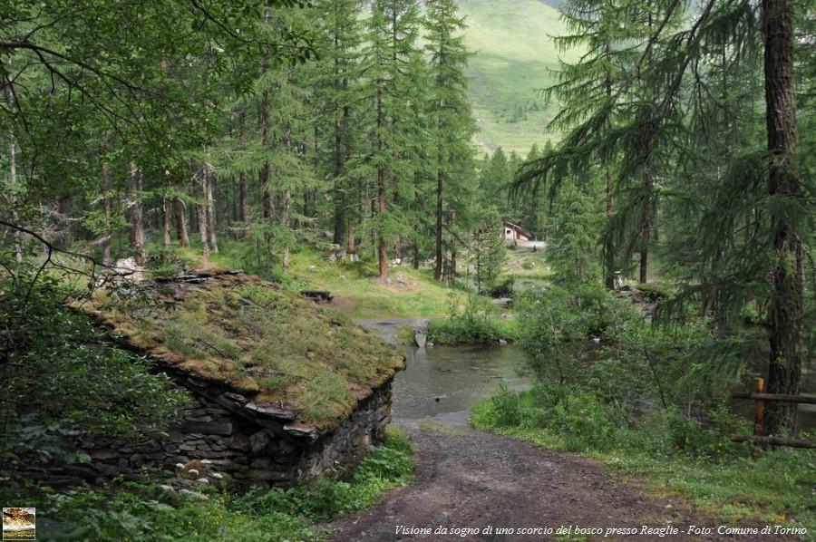 Torino: coabitare nel bosco a pochi passi dalla città